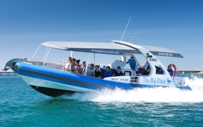 Big Duck whale-watching & dolphin cruises