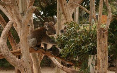 Urimbirra Open-Range Wildlife Park